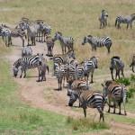 Кения 7