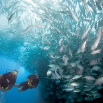 scuba-diving-havelock